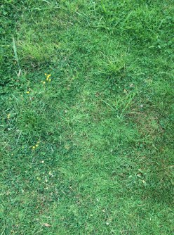 unfertilised-lawn-2017